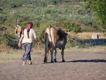 有母牛的土耳其国家妇女 免版税库存图片