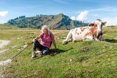 有母牛的妇女远足者 库存图片