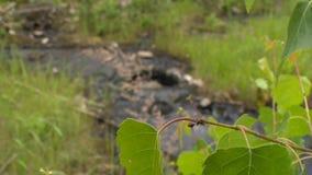 有毒废料作用自然 污染的土壤和水与化学制品和油 影视素材