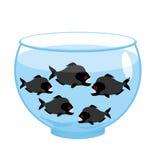 有比拉鱼的水族馆 危险邪恶的暴牙的鱼 免版税库存照片