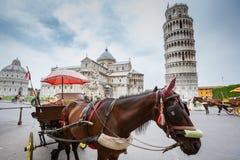 有比萨斜塔的马支架 免版税图库摄影