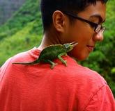 有毛伊绿色有角的蜥蜴的男孩 免版税库存图片