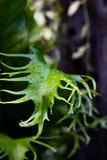 有水下落的热带蕨叶子 库存照片