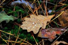有水下落的秋天叶子 免版税图库摄影