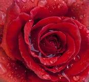 有水下落的红色罗斯 图库摄影