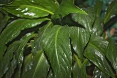 有水下落的绿色叶子,宏指令 免版税库存图片