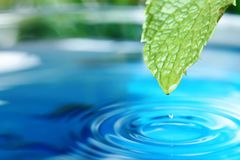 有水下落的美丽的绿色叶子在蓝色背景,特写镜头 库存图片
