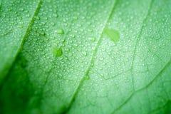 有水下落的软的焦点自然背景纹理绿色叶子 免版税库存照片
