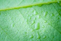 有水下落的软的焦点自然背景纹理绿色叶子 免版税图库摄影