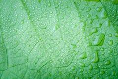 有水下落的软的焦点自然背景纹理绿色叶子 库存图片