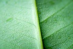 有水下落的软的焦点自然背景纹理绿色叶子 库存照片