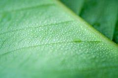 有水下落的软的焦点自然背景纹理绿色叶子 免版税库存图片