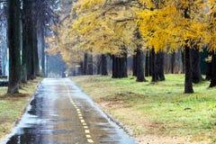 有水坑的老路在工业区在秋天 免版税库存图片