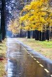 有水坑的老路在工业区在秋天 库存图片