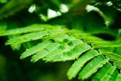 有水成串珠状的绿色植物叶子 免版税库存图片