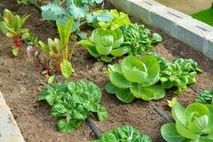 有水滴灌溉的有机菜园 免版税库存图片