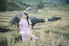 有水牛的美女 图库摄影