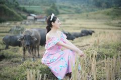 有水牛的美女 库存图片