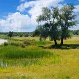有水生植被和美丽如画的草甸的老湖 免版税库存图片