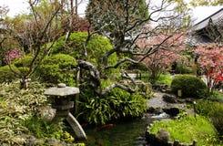 有池塘、石灯笼和开花的柑橘树的,长谷寺寺庙,镰仓,日本传统日本装饰庭院 库存照片