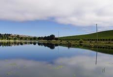 有池塘的一个葡萄园 免版税库存照片