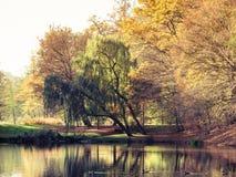 有池塘的秋天公园 蓝色多云秋天域横向偏僻的天空结构树黄色 免版税库存图片
