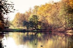 有池塘的秋天公园 蓝色多云秋天域横向偏僻的天空结构树黄色 库存图片