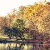 有池塘的秋天公园 蓝色多云秋天域横向偏僻的天空结构树黄色 免版税库存照片
