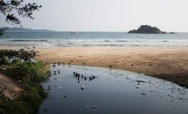 有污染问题和乌鸦的恶劣的亚洲村庄 塑料瓶、袋子和污水滴下了直接地入海洋 免版税库存图片
