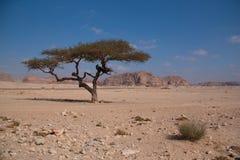 有沙子和太阳的西奈沙漠在蓝天下在与t的12月 图库摄影