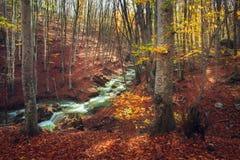 有河的美丽的秋天森林在sunse的克里米亚半岛山的 免版税库存照片