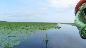 有沼泽植被的美好的安静的水道在多瑙河三角洲 影视素材
