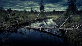 有沼泽的神奇夜森林 免版税库存图片