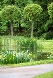 有沼泽黄色虹膜的池塘 免版税库存照片