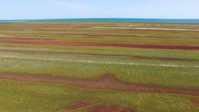 有沿海盐沼的盐湖,鸟瞰图 股票视频
