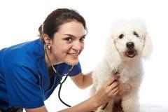 有法国长卷毛狗的兽医 免版税库存图片