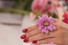 有法式修剪的妇女手指 库存照片