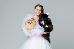 有波美丝毛狗狗婚礼夫妇的新娘女孩 图库摄影
