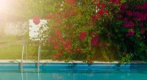 有洋红色花的游泳场 库存照片
