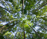 有活泼的颜色的深森林 免版税库存图片