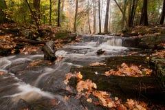 有流横向的秋天森林 免版税库存图片