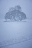 有海岛的冻池塘有很多树 库存照片