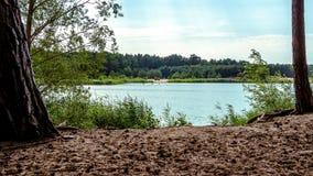 有海滩的Forest湖 免版税库存照片