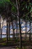 有海的地中海杉木森林在背景中 免版税图库摄影
