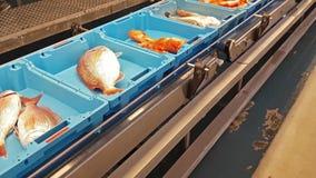 有海鱼,纤巧抓住的蓝色容器  影视素材