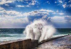 有海鸥的剧烈的风雨如磐的海在蓝天 库存图片