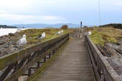 有海鸥的桥梁在海附近在挪威 库存图片