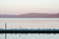 有海鸥的船坞码头 库存图片