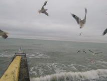 有海鸥的风雨如磐的海 图库摄影