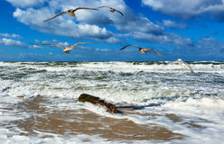 有海鸥的风雨如磐的海 免版税图库摄影